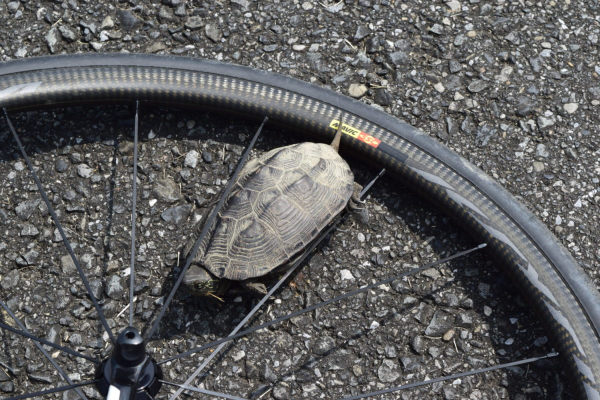 亀とロードバイク