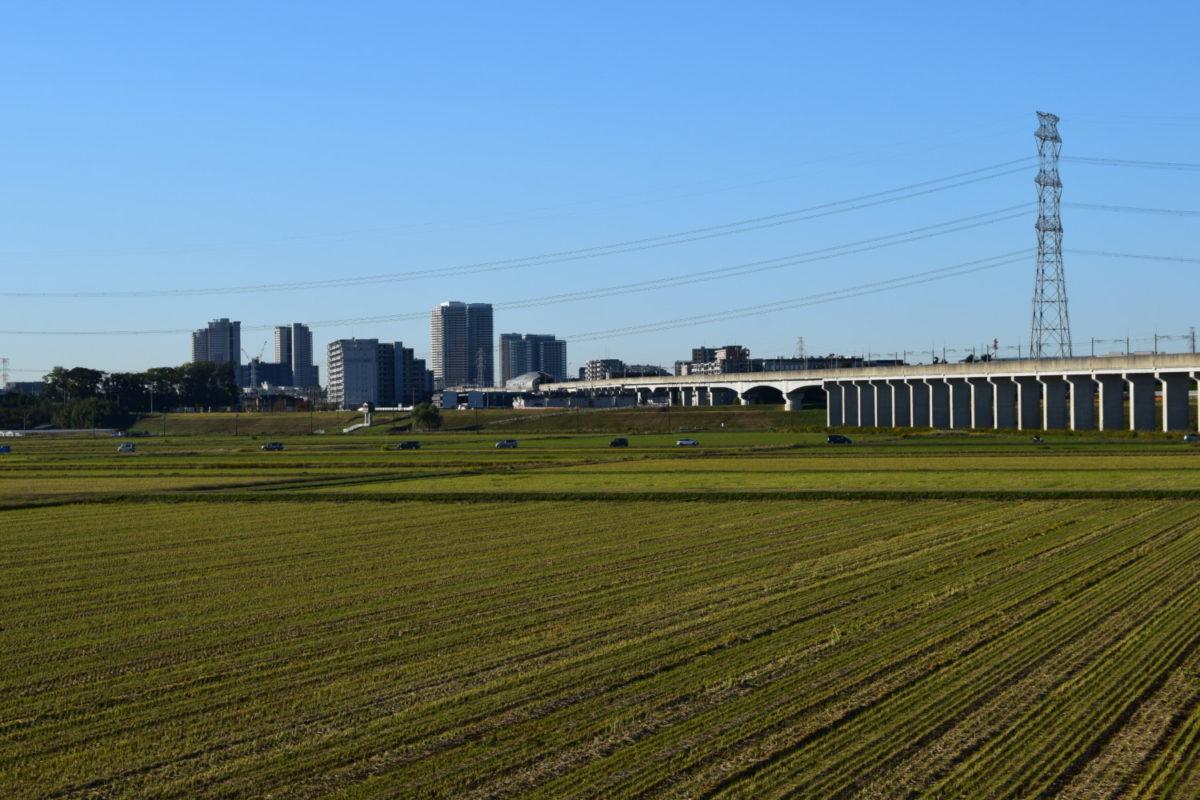 利根川サイクリングロードから見る柏の葉の街並み