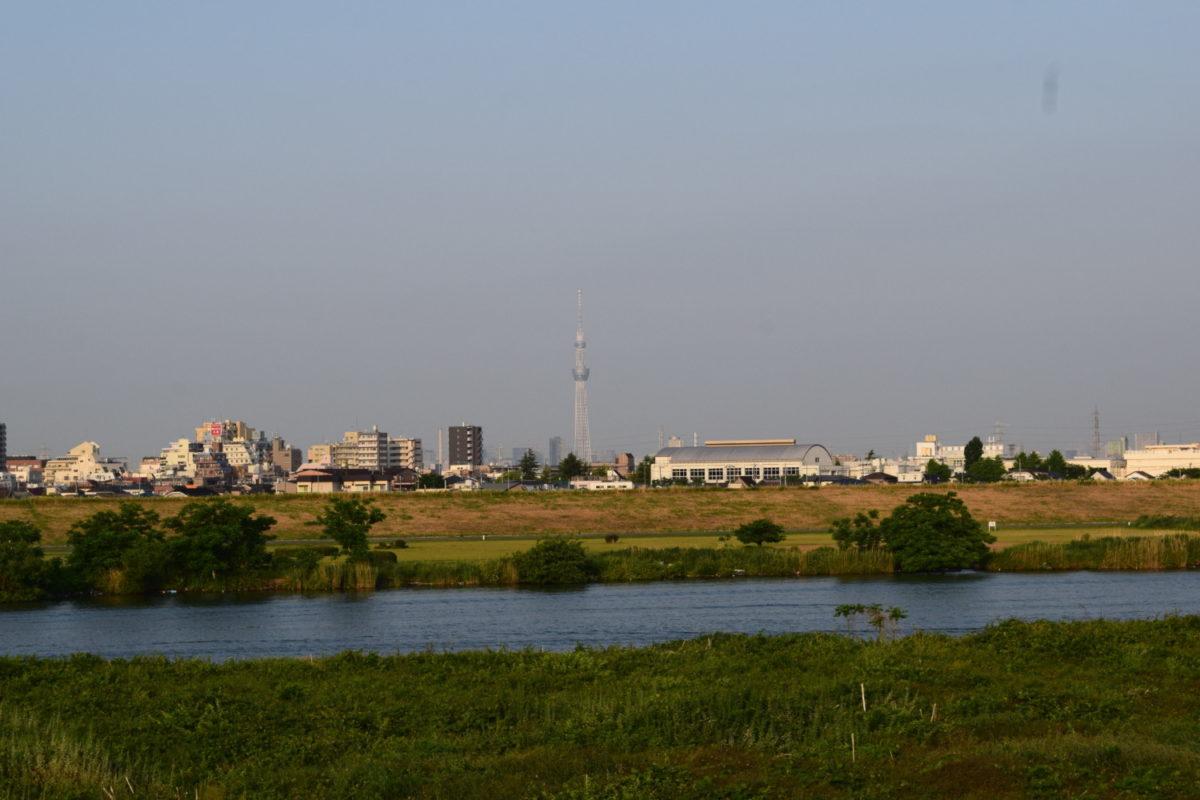 江戸川サイクリングロードから望む東京スカイツリー