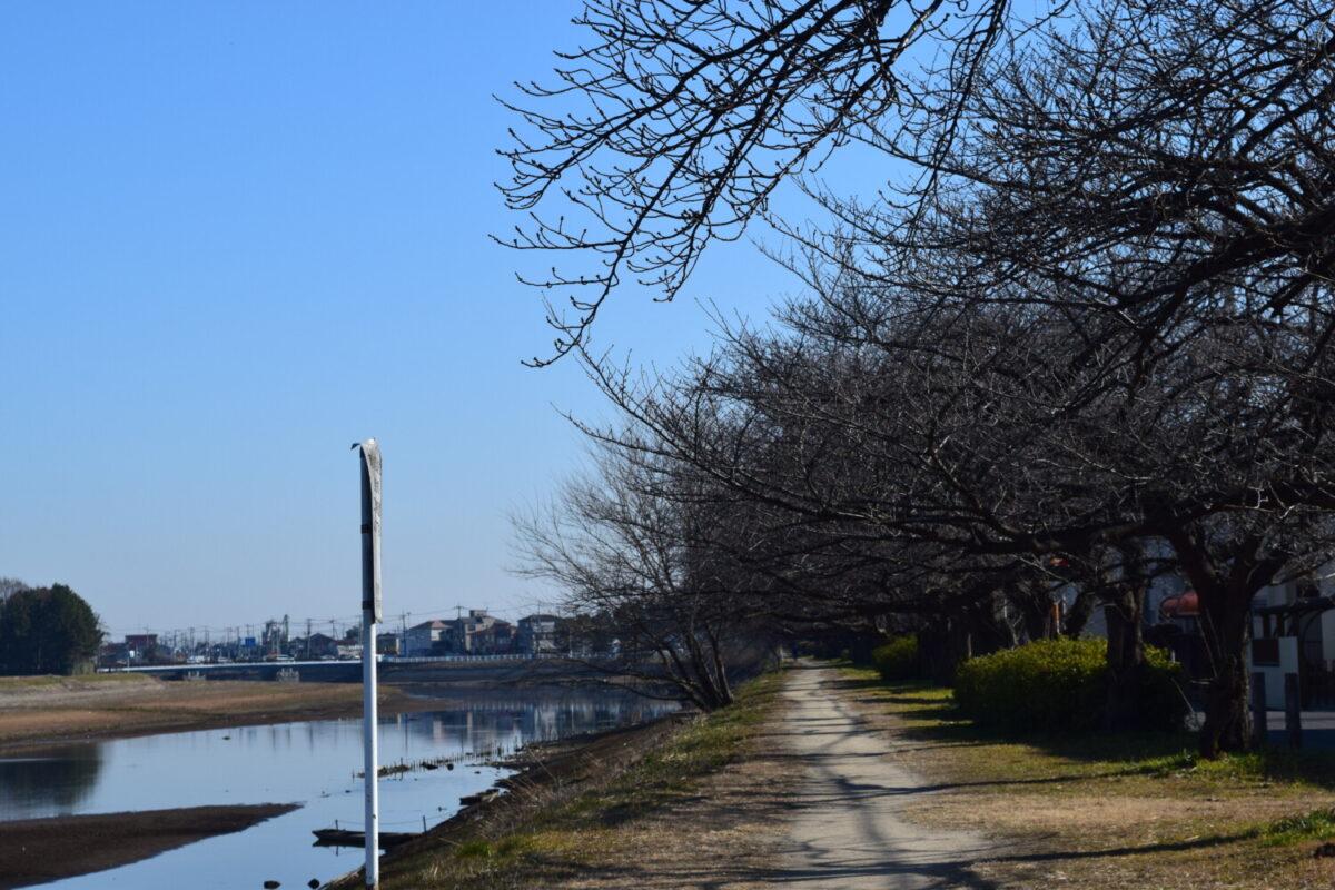 古利根川緑道